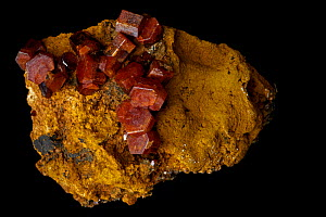 Vanadinite crystals [Pb5(VO4)3Cl / Lead chlorovanadate] from Mibladen, Morrocco. One of the main ores of vanadium and a minor ore of lead  -  John Cancalosi