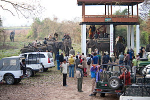 Tourists waiting to mount / dismount elephants on Elephant Safari, Asian elephants (Elephas maximus), Kaziranga NP, Assam, NE India  -  Toby Sinclair