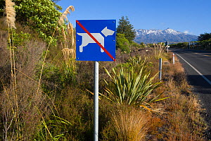 Sign prohibiting dogs from entering a Kiwi conservation area, Tongariro NP, North Island, New Zealand, January 2009  -  Ernie Janes
