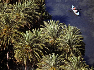 Aerial view of people kayaking on the river Megalos Potamos, between the endemic Cretan palm trees (Phoenix theophrasti) Crete, Greece  -  Angelo Gandolfi