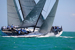 ^Numbers^ and ^Shockwave^ racing in Key West Race Week. Florida, USA, January 2011.  -  Billy Black