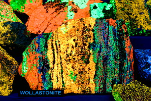 Fluorescent Wollastonite seen under ultraviolet (UV) light, New Jersey, USA. (Compare with the view under white light.)  -  Visuals Unlimited