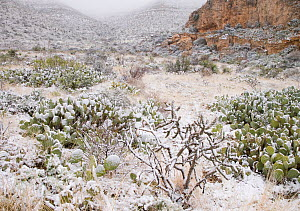 Snow in Walnut Canyon, Guadalupe Mountains, Carlsbad Caverns National Park, New Mexico, USA. April 2007  -  Visuals Unlimited