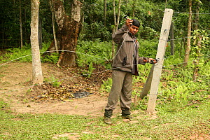 Man mending damage to elephant fence, designed to protect agricultural crops from being eaten. Indian Elephants (Elephas maximus) sometimes break through and come into conflict with humans. India. Nov...  -  Vivek Menon