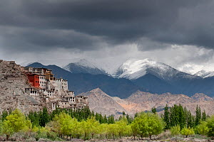 Spituk Gompa seen from the left bank of the Indus river, Leh region, Ladakh, India, June 2010  -  Bernard Castelein