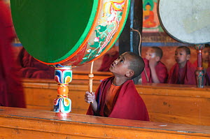 Young buddhist monk beating the drum during morning pudja, Thikse Gompa / Monastery, Ladakh, India  -  Bernard Castelein