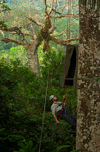 "Canopy access specialist James Aldred climbing to hide for filming of Harpy eagle (Harpia harpyja) nest with young bird in background. Darien, Panama. Picture taken during filming for BBC ""Planet Eart...  -  Barrie Britton"