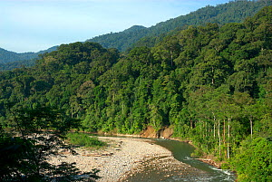 View across tropical rainforest, Ketambe Research Station, Gunung Leuser National Park, Sumatra, Indonesia. Picture taken during filming trip for BBC ^Life^ Series, August 2007 - Barrie Britton