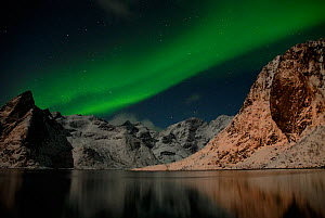 The Northern lights (Aurora borealis) viewed from Moskenes, Lofoten, Nordland, Norway, March 2006. - Orsolya Haarberg,Orsolya  Haarberg
