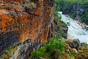 River flowing through the Abisko National Park, with coloured lichen on the rock face, Laponia, Sweden, autumn, September 2006  -  Orsolya Haarberg
