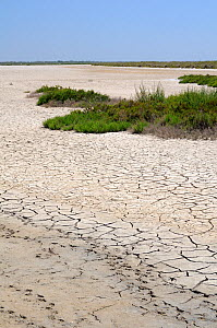Cracked dried mud and Flamingo footprints, Etang de Fangassier, the Camargue, France. May 2010.  -  Nick Upton