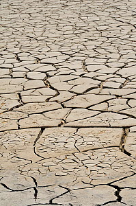 Dry cracked mud in drought conditions, Etang de Fangassier, the Camargue, France, May 2010.  -  Nick Upton