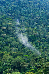 Bwindi Impenetrable Forest, home of the Mountain gorilla, Uganda, East Africa, October 2008  -  Mark Carwardine
