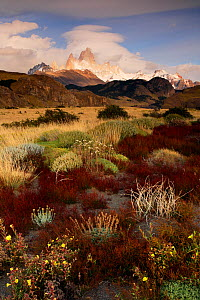 Patagonian landscape with Cerro Fitz Roy or Chalten (3405 m) in the background, Los Glaciares National Park, Patagonia, Argentina, January 2006  -  Oriol Alamany