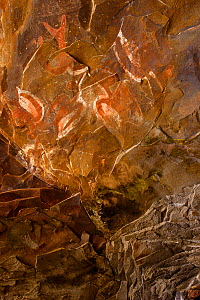 Rock paintings of Terns (Sterna sp) at Ana Kai Tangata cave, Easter Island (Pascua or Rapa Nui), Pacific Island, Unesco World Heritage Site, November 2004 - Oriol Alamany