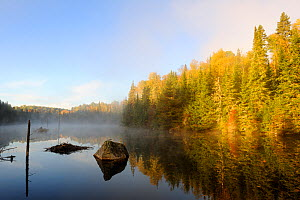 Mist and autumn coloured tress at Bouchard lake. La Mauricie National Park, Quebec, Canada, October 2010  -  Eric Baccega