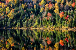 Autumn reflections on Modene Lake and forest. La Mauricie National Park, Quebec, Canada, October 2010  -  Eric Baccega