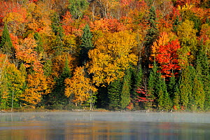 Autumn colour on Modene lake. La Mauricie National Park, Quebec, Canada, October 2010  -  Eric Baccega