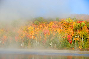 Mist and autumn coloured tress in Modene lake. La Mauricie National Park, Quebec, Canada  -  Eric Baccega