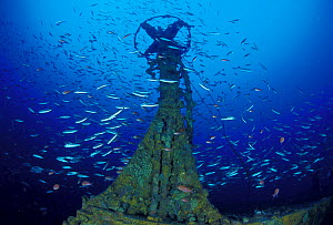 "Structure on wreck of crude oil super-tanker ""Amoco Milford Haven"", surrounded by Swallowtail anthias (Anthias anthias) and Bogues (Boops boops) at 50m. The tanker sank on April 14th, 1991 after three...  -  Roberto Rinaldi"