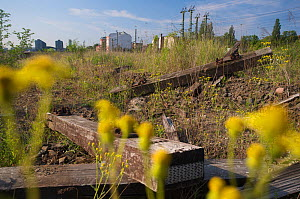 Vegetation on urban waste land close to Berlin central station, Berlin, Germany, May 2008  -  Florian Möllers