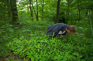 Michael Ristow, a botanist with the University of Potsdam, investigating a site for Siberian Iris (Iris sibirica) in the Wuhlheide, Berlin, Germany, May 2008  -  Florian Möllers