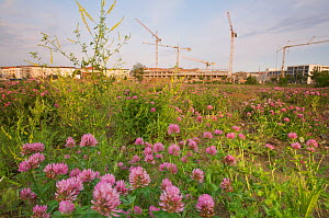 Breeding habitat of Crested lark (Galerida cristata) and Common wheatear (Oenanthe oenanthe) on a construction site in Berlin, Germany, May 2009  -  Florian Möllers