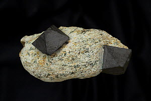 Magnetite (FeO4, ferrous and ferric oxide), an important ore of iron that is naturally magnetic. Yinnietharra, Western Australia  -  John Cancalosi