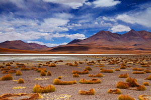 The remote region of high desert, altiplano and volcanoes near Tapaquilcha, Bolivia, December 2009  -  David Noton