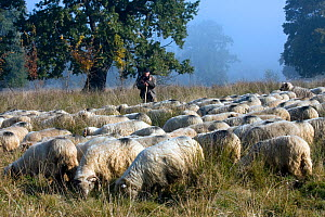 Wood pasture in early morning mist, with shepherd and sheep (Ovis aries). This high quality landscape is preserved by traditional management in a project backed by the NGO AEPT and EEC grants. Briete...  -  David Woodfall