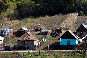 Strip agriculture in Romany village, part of a peasant economy and high quality landscape maintained by NGO ADEPT and EEC grants. Romania, October 2010 - David Woodfall