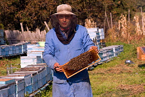 Beekeeper in practical clothing holding a comb of bees (Apis mellifera). Part of a traditional peasant economy and a low key, sustainable way to maintain high quality landscape and wildlife. Romania,...  -  David Woodfall