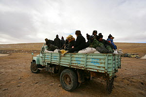 People riding on a truck stacked with sacks of poison. These are distributed to farmers as part of an annual compulsory cull to control the Tibetan Pika (Ochotona thibetana) population, Qinghai Provin... - XI ZHINONG