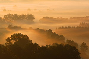 Vosges forest at dawn, France, October 2010  -  Fabrice Cahez