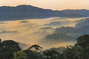 Valley fog at dawn in the mountains of the Nyungwe Forest National Park, Rwanda.  -  Visuals Unlimited