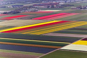 Aerial view of flower field patterns surrounding Amsterdam, Holland, February 2010  -  Visuals Unlimited