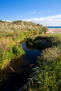 Freshwater stream cutting through dunes to Bamburgh Beach, Northumberland Coast Area of Outstanding Natural Beauty (AONB), England, July 2010. - Toby Roxburgh