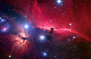 The Horsehead Nebula region (Barnard33)  -  Visuals Unlimited