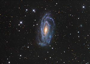 NGC 5033 Spiral Galaxy in Canes Venatici  -  Visuals Unlimited