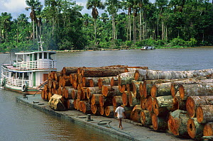 Barge loaded with rainforest logs in the Amazon River, Para, Brazil  -  Visuals Unlimited