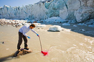 Scientist using dye tracing techniques as part of a study to measure the speed of the Russell Glacier near Kangerlussuag, Greenland. The study is looking at how increasing quantities of melt water cau...  -  Visuals Unlimited