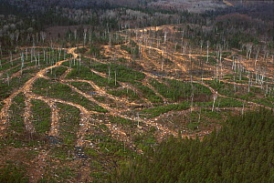 Clearcut forest, Green Mountains, Vermont, USA.  -  Visuals Unlimited