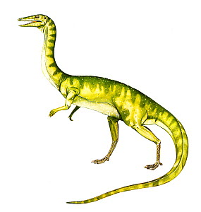 Illustration of the dinosaur Coelophysis,living in the Late Jurassic / Early Triassic, 203-216 Ma ago. - Chris Shields