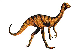 Illustration of the dinosaur Compsognathus,about the size of a turkey. Lived in the late Jurassic, 150 Ma ago. - Chris Shields
