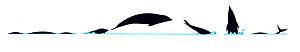 Illustration of Southern Rightwhale Dolphin (Lissodelphis peronii), dive and jump sequence in profile (Wildlife Art Company).  -  Martin Camm / Carwardine