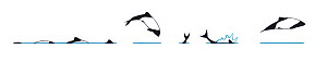 Illustration of Commerson's / Skunk / Piebald Dolphin (Cephalorhynchus commersonii), dive and jump sequence in profile (Wildlife Art Company).  -  Martin Camm / Carwardine