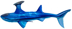 Stethacanthus (prehistoric shark) - extinct.  -  Ian Coleman