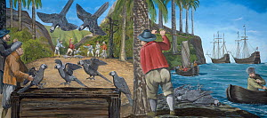 Illustration of Thirioux's grey parrot (Psittacula bensoni) - extinct 1764 - at a harbour on Mauritius,c1602. The woodcut on which this reconstruction is based constitutes the only known image of Thir...  -  Julian Hume