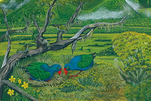 Illustration of breeding pair of Oiseaux bleus / Swamp hen on the Plaine Caffres,Reunion (extinct 1700). This species is known from only a few reliable accounts, and appears to have been a large galli... - Julian Hume