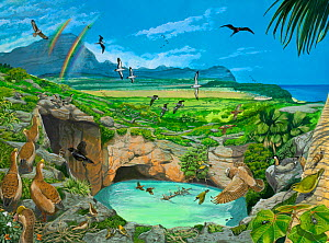 Illustration of view of Makauwahi Sinkhole from the southwest side as it might have appeared 3000 years ago,prior to human arrival. On left side,a flock of turtle-jawed moa-nalo (Chelychelynechen quas... - Julian Hume
